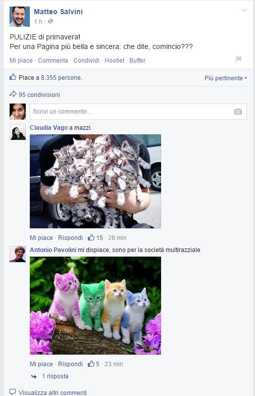 gattini salvini